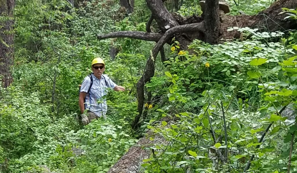 A man with a yellow helmet in the forest.