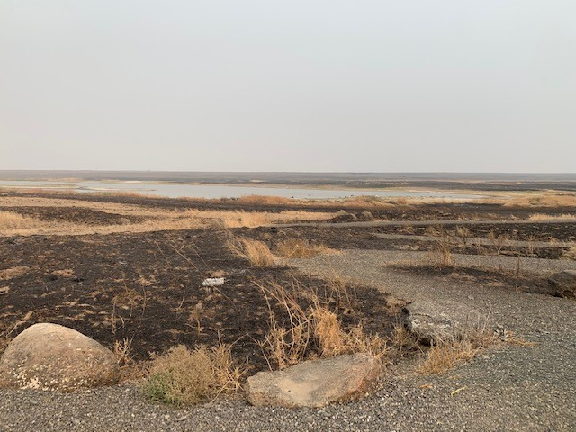 Charred ground and rocks at the Swanson Lakes Wildlife Area after the Whitney Fire, Sept. 2020. Photo courtesy Kim Thorburn.