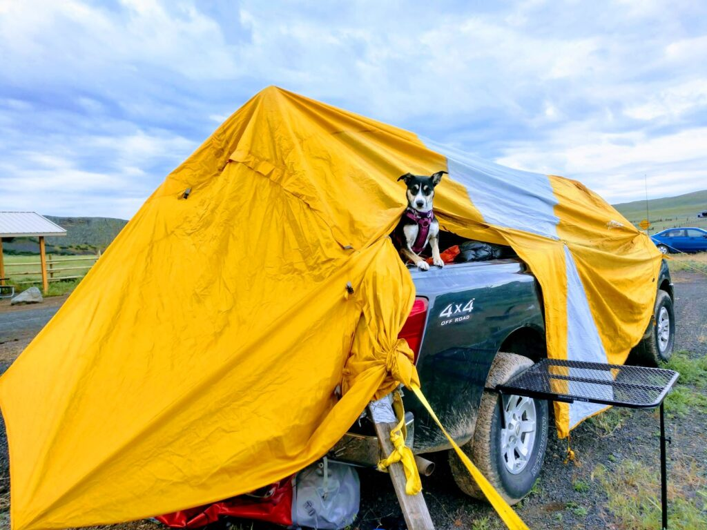 Yellow tent strung across the back of a pick-up truck with a cute dog pocking her head out of an opening.