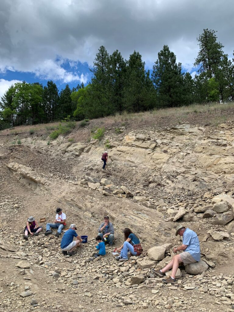 People digging for fossils at Stonerose Interpretitve Center and Eocene Fossil Site in Republic, Washington. Rocky, dry, arid dirt with trees in the background.