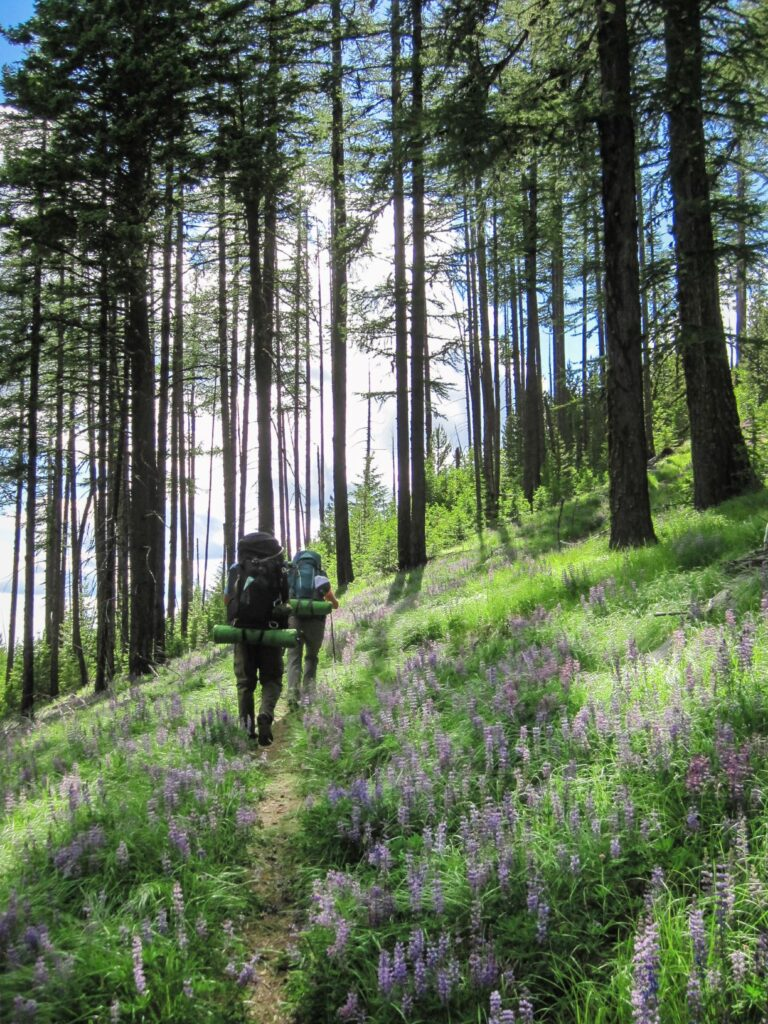 Two backpackers hiking along a forested section of the Kettle Crest Trail, with wildflowers alongside the trail.