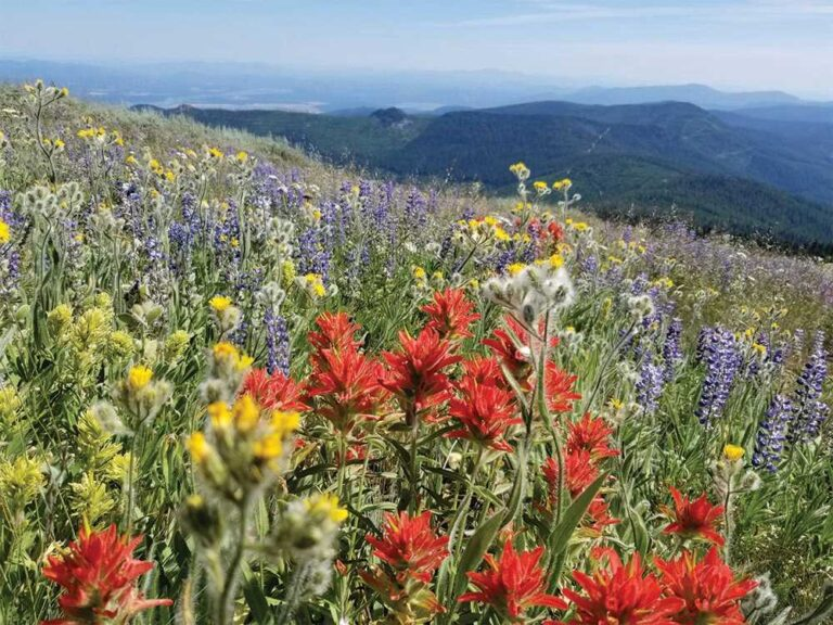 Red, yellow, white, and purple wildflowers on the mountainside of the Pend Oreille River valley in northeast Washington.