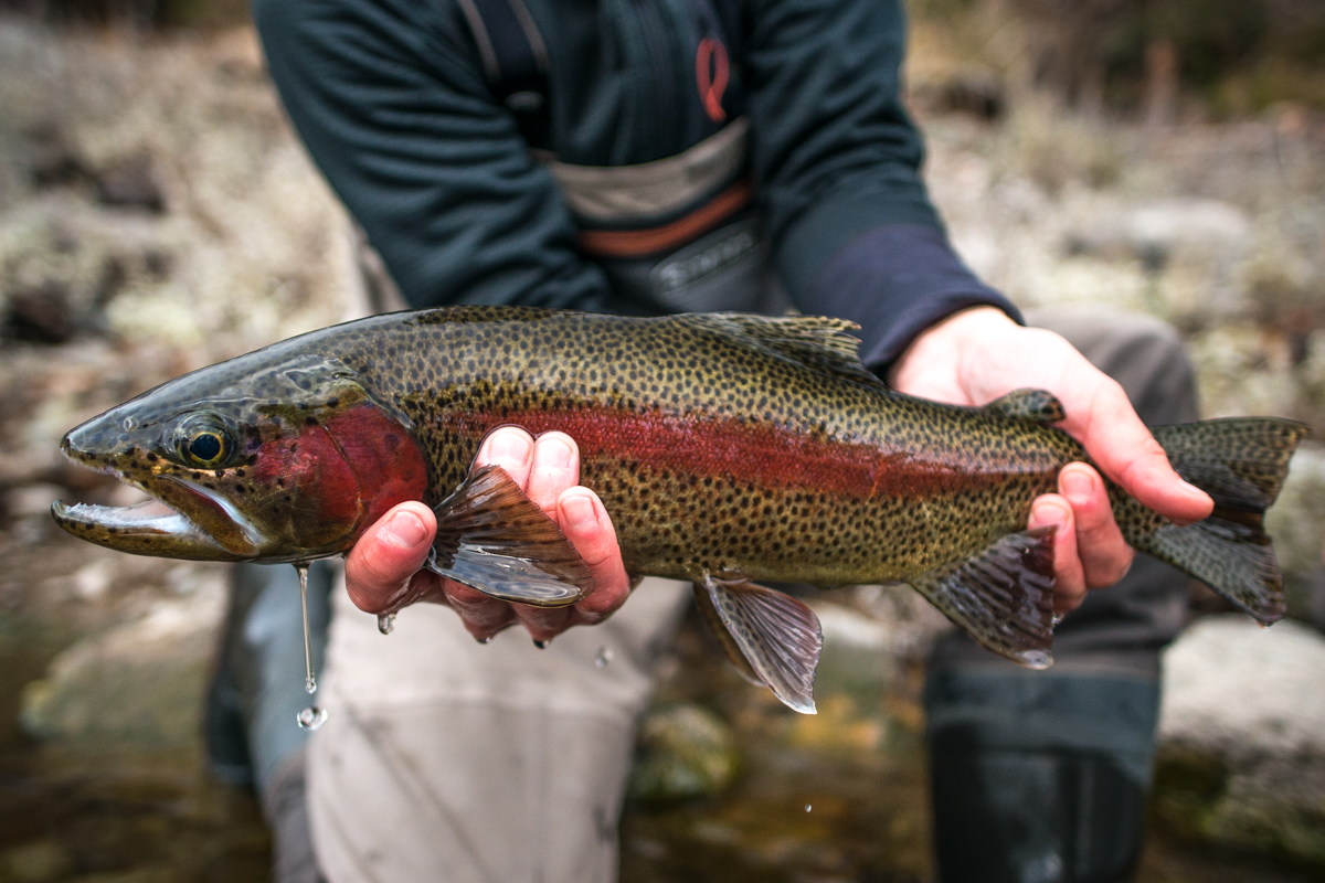 Man holding a redband trout with two hands, one hand under the belly and another at the tail.