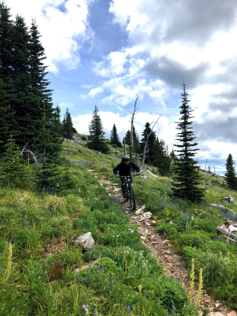 Mountain biking a down a singletrack trail at Abercrombie Mountain, past wildflowers and alpine trees.