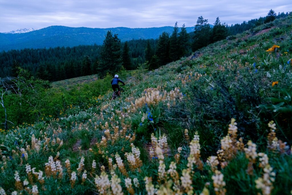 Mountain biker, at dusk, riding a singletrack trail among wildflowers with the North Cascade mountain peaks in the distance.