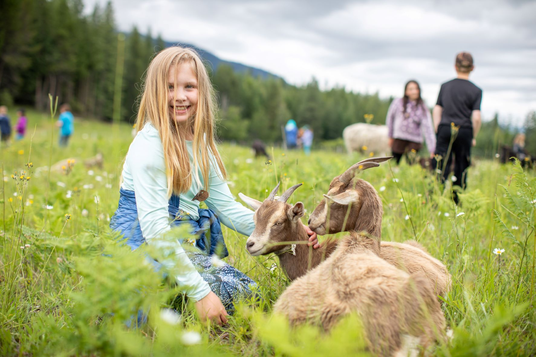 Girl petting goats who are eating weeds at Pine Street Woods Community Forest.