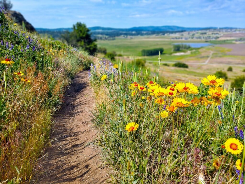Dirt trail traversing a hillside, with yellow, orange, and purple wildflowers along the sides.