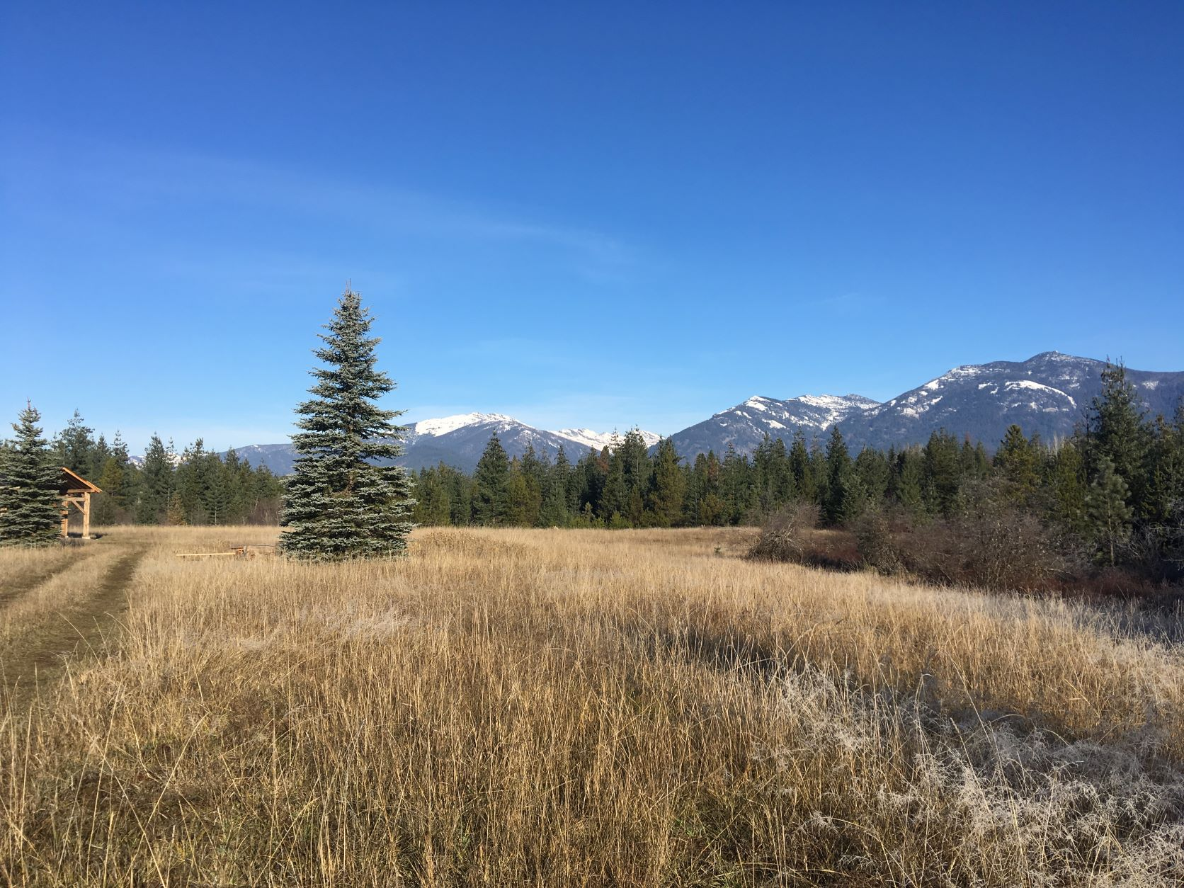 Majestic views of the Cabinets, pristine beaver habitat, and native plants make this place special. Grassy meadow with a few conifer trees and snowcapped peaks in the far distance.