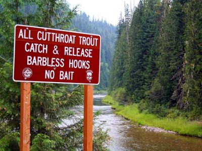 Conservation is a key component to the North Fork's sustained fish populations. All photos courtesy of David Uhlenkott